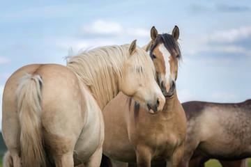 Pair of horses.