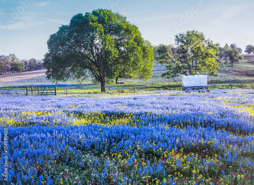 Poster Texas Texas Hill country in spring