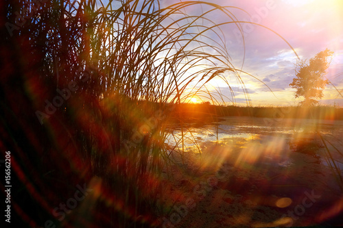 Foto op Plexiglas Bruin Grass near the water at sunset