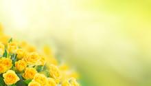 Fresh Yellow Roses In Green Sunny Garden Banner