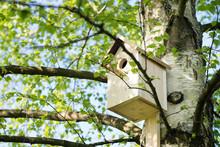 Birdhouse On A Birch Tree, Han...