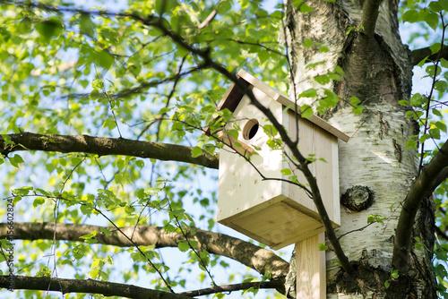 Birdhouse on a birch tree, hand made Fototapeta