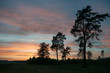 The silhouette of the pine trees opposite the colorful sunset,
