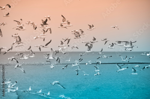 Gulls birds in the sky, beach, Baltic Sea, Latvia Canvas Print