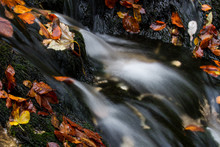 Running Water Over Black Rocks  And Fall Leaves- Slovenia