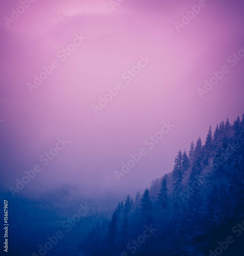 Poster Purple Photo depicting a backdrop foggy mystic pine tree woods in the mountains. Dark creepy scene. Foggy cloudy morning in Mountains Pirin, Bulgaria.