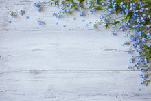 Forget-me-not On A Wooden Back...