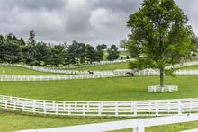 Paddocks Of White Fences On Horse Farm