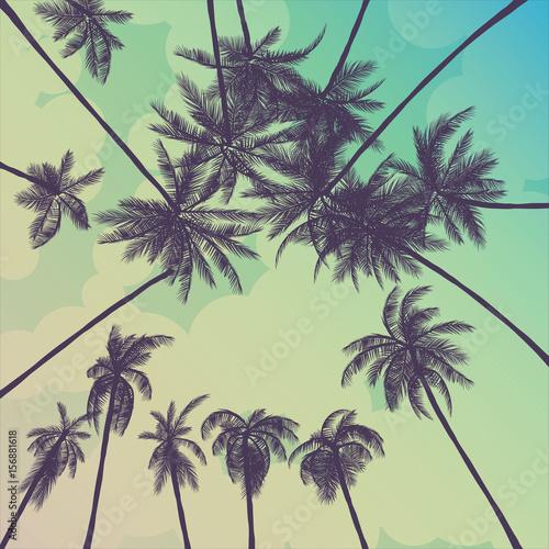 letnie-palmy-w-kalifornii