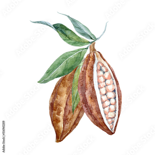 Fotomural  Watercolor cacao fruits
