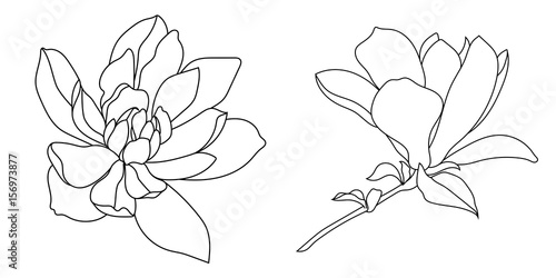 Set of graphical hand drawn magnolia flowers. Vector. Canvas Print