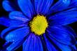 Leinwandbild Motiv blue macro flower