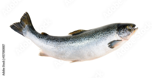 Stickers pour portes Poisson Salmon fish isolated on white without shadow