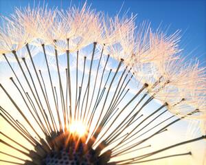 FototapetaPusteblume - Closeup im Sonnenlicht