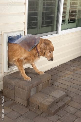 Doggie door and pet Canvas Print