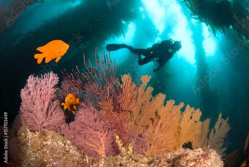 Obraz na dibondzie (fotoboard) Kolorowa podwodna rafa