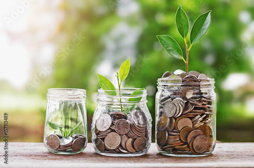 Fotomural  Plant growing Coins in glass  jar with investment financial concept and green na