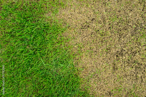 Fotografía Pests and disease cause amount of damage to green lawns, lawn in bad condition a