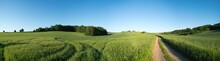 Panorama Summer Green Field L...