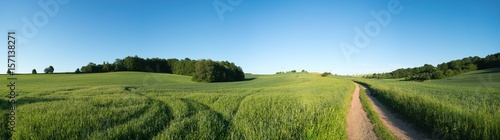 Panorama summer green field landscape with dirt road