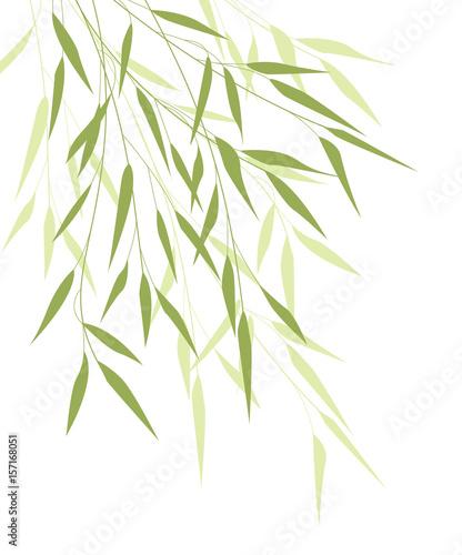 Obraz na płótnie Bambusowe liście