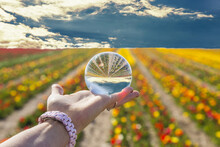 Young Woman Hand Holding A Crystal Ball In A Field Of Flower Garden. Morning Sun Light Woman And Crystal Ball