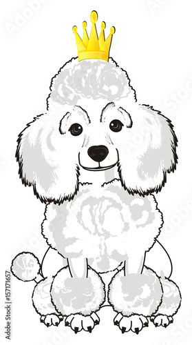 Poodle Dog Puppy Cartoon Friend Pet Animal Hair Nose Breed Grace Funny White Crown Princess Golden Yellow Queen Sit Buy This Stock Illustration And Explore Similar Illustrations At Adobe Stock I am more of a dog person myself. poodle dog puppy cartoon friend