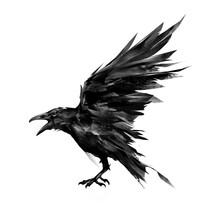 Drawn Flying Bird Raven On White Background