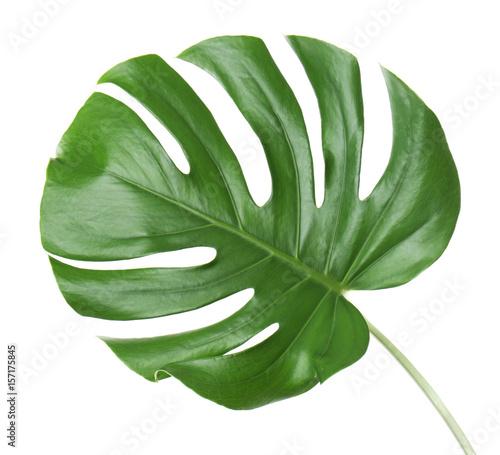 Poster Vegetal Monstera leaf, isolated on white