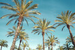 Travel, tourism, vacation, nature and summer holidays concept - palm trees over a blue sky background
