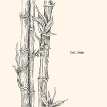 Beautiful Background With Bamboo. Vintage Style. Vector Illustration.
