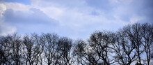 Tree With Bare Branches In Forest On Blue Sky