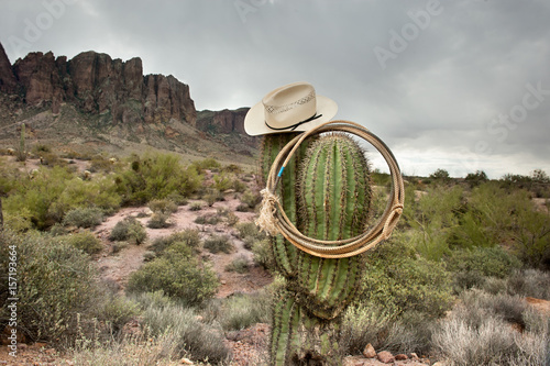 Fotomural Lasso on cactus