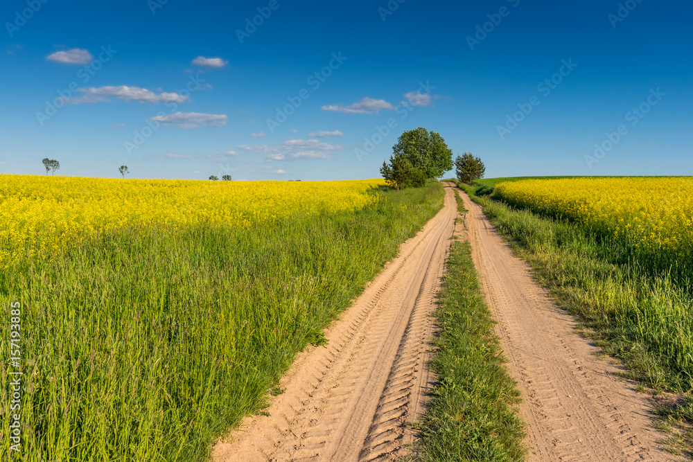 Fototapety, obrazy: Spring landscape, Rape field