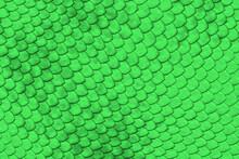 Green Reptile Skin
