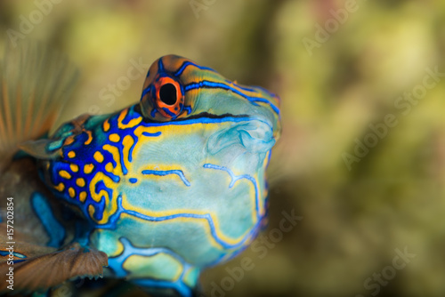 Exotic tropic saltwater fish checking out the environment stunning