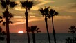 Orange Sun Sinks Below Ocean Horizon with Palm Tree and Bird Silhouettes