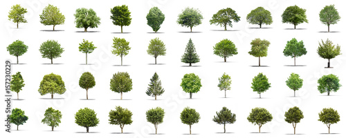 High definition collection Tree isolated on a white background Canvas Print