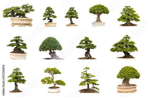 Montage in der Fensternische Bonsai green tree on white background