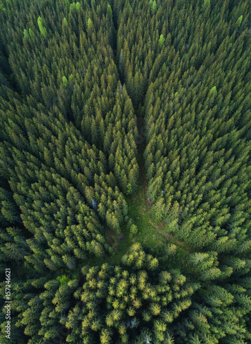 Foto auf Gartenposter Wald Forest as a background. Natural background from air