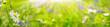 Leinwandbild Motiv Green summer background  -   Flower garden in the sun  -  Nature  -  Banner
