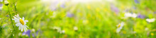 Green Summer Background  -   Flower Garden In The Sun  -  Nature  -  Banner