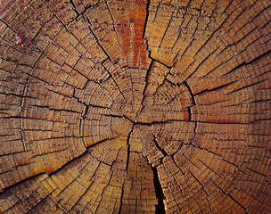 Fototapeta old wood log. colorful wooden