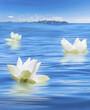 trois fleurs blanches de lotus sur mer d'huile en Thaïlande