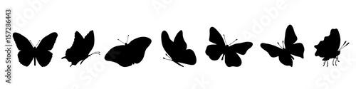 Fotografie, Obraz  Vector silhouette of butterflly on white background.