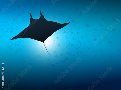 Fotografia Big manta ray in ocean water. Underwater life.