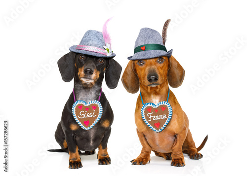 Keuken foto achterwand Crazy dog bavarian beer dachshund sausage dogs , couple of two