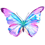 Fototapeta Motyle - beautiful pink butterfly,watercolor,isolated on a white