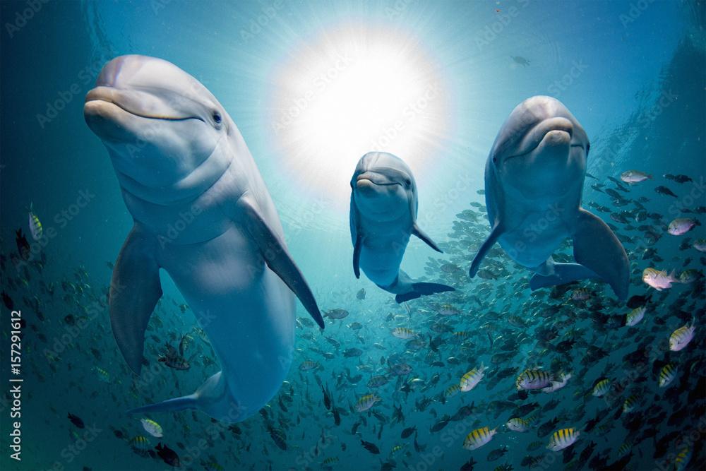 Fototapeta dolphin family underwater on reef close up look