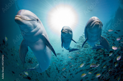 Spoed Foto op Canvas Dolfijn dolphin family underwater on reef close up look